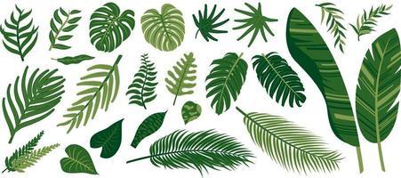 tropische Blätter auf weißer Hintergrundvektorillustration