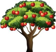 Apfelbaum lokalisiert auf weißem Hintergrund vektor