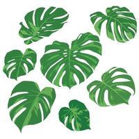 Grünblätter auf Illustrationsgrafikvektor vektor