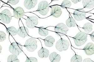mönster av eukalyptusblad dras med akvarell
