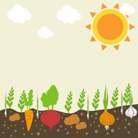 Grönsaker Trädgård
