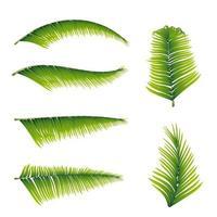 Sammlung von Palmblättern lokalisiert auf weißem Hintergrund für Ihre Kreativität vektor