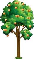 orange fruktträd i tecknad stil isolerad på vit bakgrund vektor