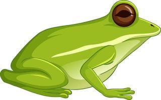grüner Laubfrosch sitzt lokalisiert auf weißem Hintergrund vektor