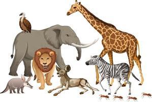 Gruppe des wilden afrikanischen Tieres auf weißem Hintergrund vektor