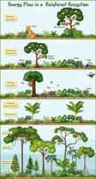 Energiefluss in einem Regenwald-Ökosystemdiagramm vektor