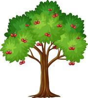 körsbärsträd isolerad på vit bakgrund vektor