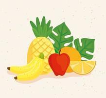 söta tropiska färska frukter vektor