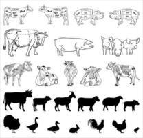 Metzgerei Tafelschnitt von Rindfleisch. vektor