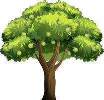 Guavenfruchtbaum im Karikaturstil lokalisiert auf weißem Hintergrund vektor