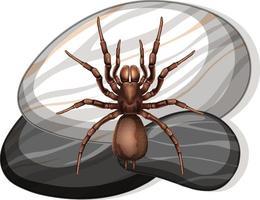 Draufsicht der Spinne auf einem Stein auf weißem Hintergrund vektor