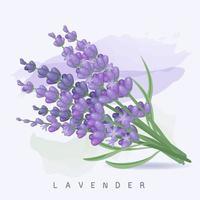 schöner pastellpurpurner Lavendel und Aquarellhintergrund vektor