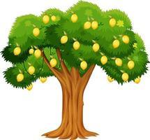 citronträd isolerad på vit bakgrund vektor
