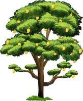 gul mangoträd isolerad på vit bakgrund vektor