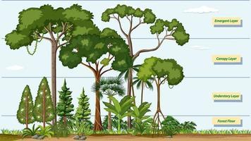 Schichten eines Regenwaldes mit Namen vektor