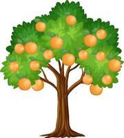 apelsinträd isolerad på vit bakgrund vektor