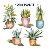heimische Pflanzensammlung