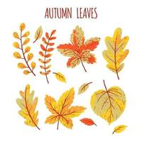 Herbstlaubsammlung vektor