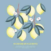 Vektor handgezeichnete Zitronen