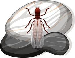 Draufsicht der Termite auf einem Stein auf weißem Hintergrund vektor