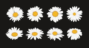 samling av tusensköna blomma med platt design stil vektor