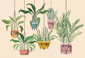 Zimmerpflanzen in Makramee-Kleiderbügeln
