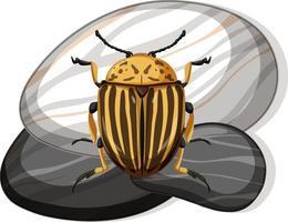 Draufsicht des Colorado-Käfers auf einem Stein auf weißem Hintergrund vektor