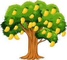gelber Mangobaum lokalisiert auf weißem Hintergrund vektor