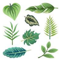 samling av vackra tropiska blad isolerad på vit bakgrund.