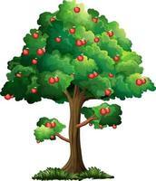 äppelträd isolerad på vit bakgrund vektor