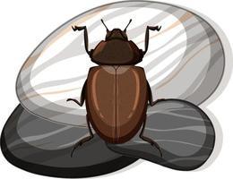 Draufsicht des afrikanischen schwarzen Käfers auf einem Stein auf weißem Hintergrund vektor