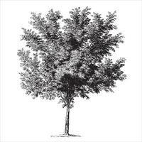 Vintage-Illustrationen des Pfirsichbaums vektor