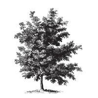 svart körsbärsträd vintage illustrationer vektor