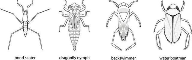 uppsättning olika typer av buggar och skalbaggar med namn vektor