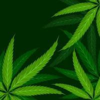 Cannabis hinterlässt Hintergrund vektor