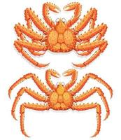 alaskan king krabba. vektor illustration.