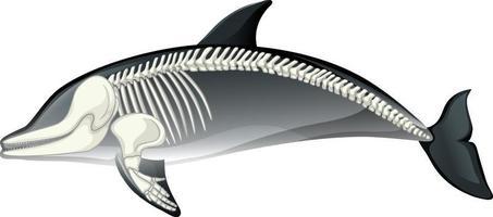 Skelettanatomie des Delphins lokalisiert auf weißem Hintergrund vektor