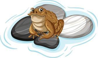Nahaufnahme einer Kröte auf Steinblatt isoliert vektor