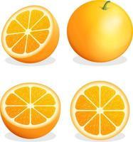 Orangenfrucht. Vektorillustration. vektor