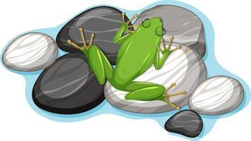 Draufsicht des Frosches auf einem Stein lokalisiert auf weißem Hintergrund vektor