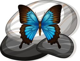 Draufsicht des Schmetterlings auf einem Stein auf weißem Hintergrund vektor