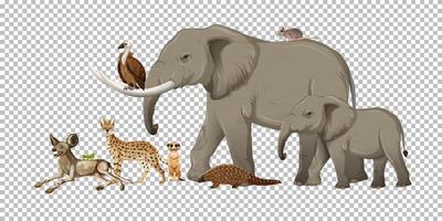Gruppe von wilden afrikanischen Tieren vektor