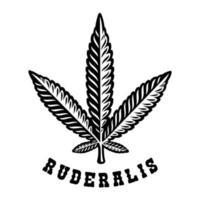 svartvit illustration av ett cannabisblad ruderalis i gravyrstil.