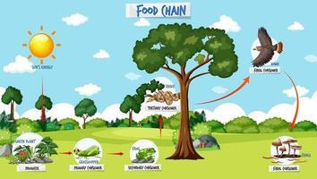Nahrungskettendiagrammkonzept auf Waldhintergrund vektor