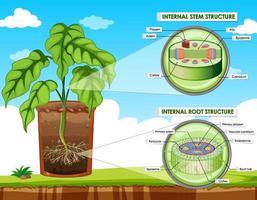 diagram som visar stam- och rotstruktur
