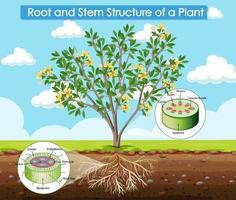 Diagramm, das die Wurzel- und Stammstruktur einer Pflanze zeigt vektor