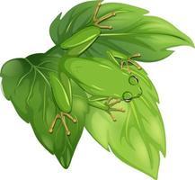 ovanifrån av en groda på blad isolerad på vit bakgrund vektor