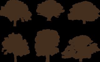 Ek träd silhuetter