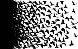 fliegende Vögel Silhouetten auf weißem Hintergrund. Vektorillustration. isoliertes Vogelfliegen. Tattoo Design. vektor
