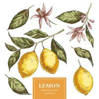 Zitronenhand gezeichnete Vektorillustrationen packen vektor